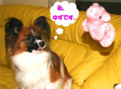 yuzu061124-1.jpg