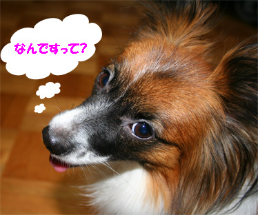 yuzu061124-2.jpg