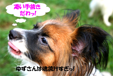 yuzu061124-3.jpg