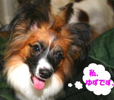 yuzu061128-1.jpg