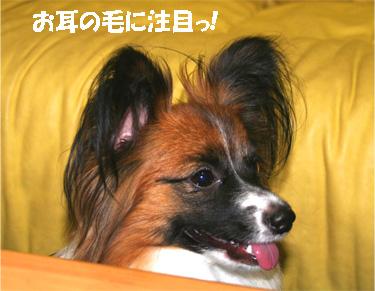 yuzu061128-2.jpg