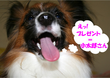 yuzu061129-2.jpg