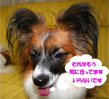 yuzu061129-3.jpg
