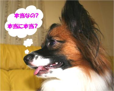 yuzu061129-4.jpg