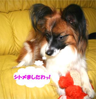 yuzu061130-1.jpg