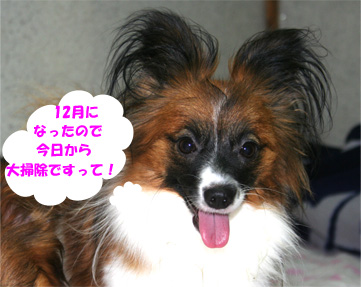 yuzu061202-1.jpg