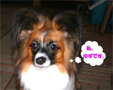 yuzu061204-1.jpg