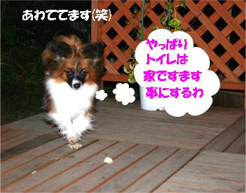 yuzu061204-2.jpg