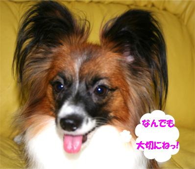 yuzu061205-1.jpg