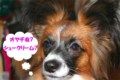 yuzu061206-1.jpg