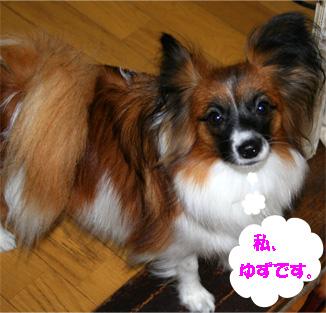 yuzu061207-1.jpg