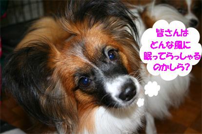 yuzu061207-2.jpg