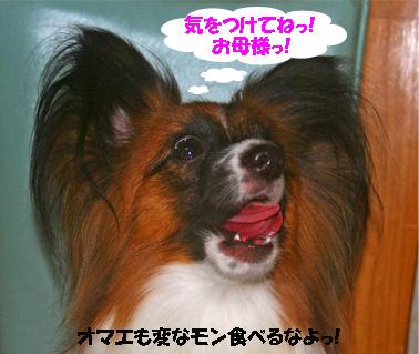 yuzu061207-4.jpg