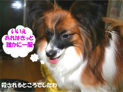yuzu061207-5.jpg