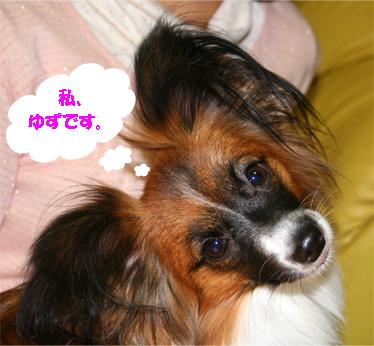 yuzu061208-1.jpg