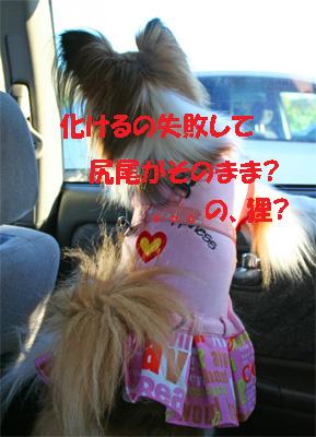 yuzu061209-1.jpg