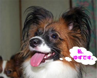 yuzu061210-1.jpg