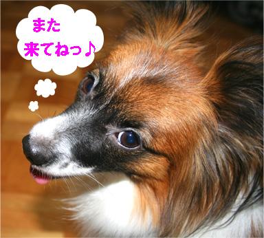 yuzu061211-1.jpg