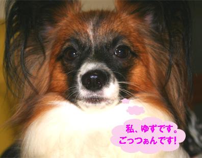 yuzu061212-1.jpg