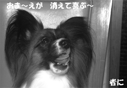 yuzu061214-1.jpg