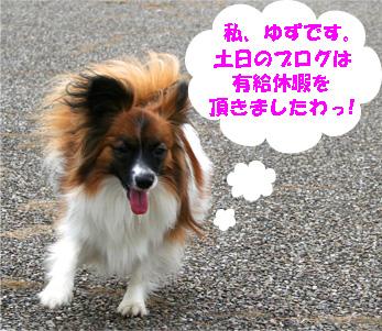 yuzu061218-1.jpg