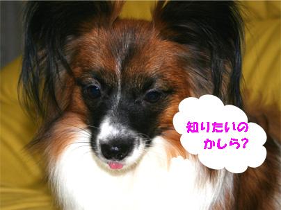 yuzu061218-2.jpg