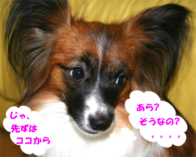 yuzu061218-3.jpg