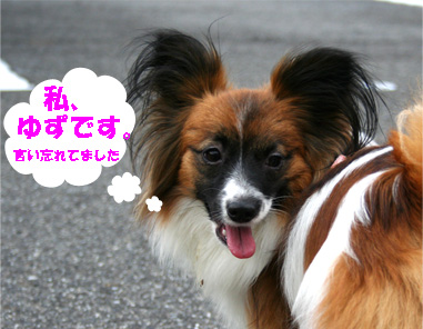 yuzu061222-1.jpg
