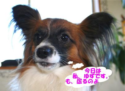 yuzu061222-2.jpg