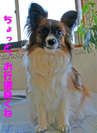 yuzu061223-2.jpg