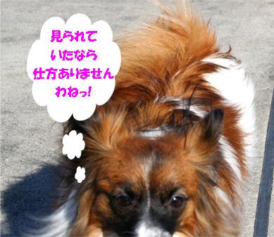 yuzu061224-1.jpg