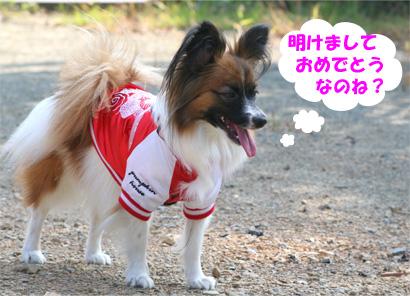 yuzu070101-1.jpg