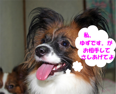 yuzu070102-1.jpg