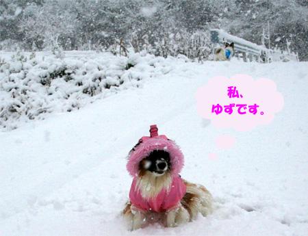 yuzu070107-1.jpg