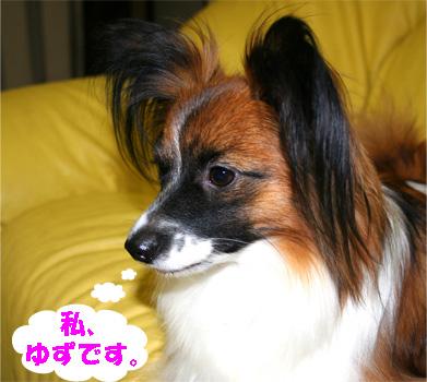 yuzu070110-1.jpg