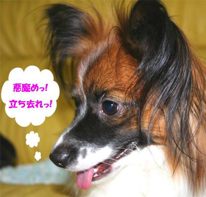yuzu070111-1.jpg