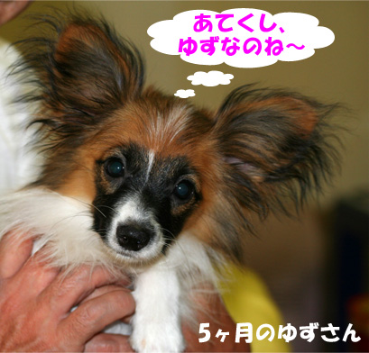 yuzu070112-1.jpg