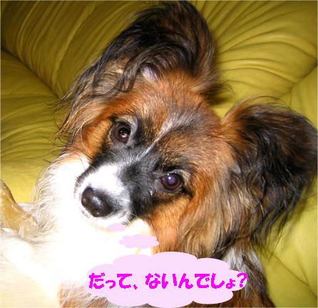 yuzu070112-3.jpg