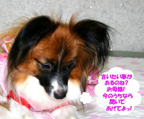 yuzu070112-4.jpg