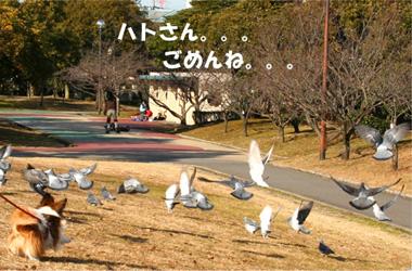 yuzu070115-1.jpg