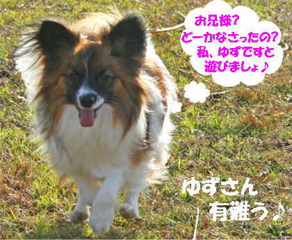 yuzu070117-1.jpg