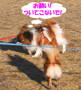 yuzu070118-1.jpg