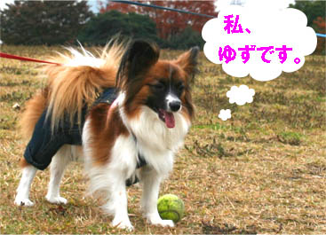 yuzu070122-1.jpg