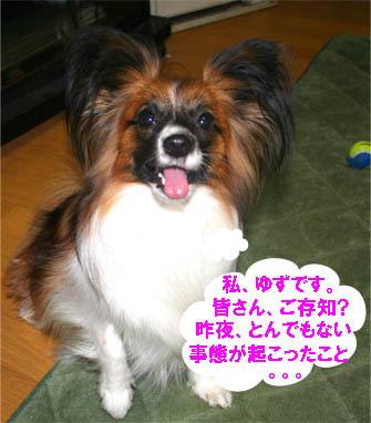 yuzu070123-1.jpg