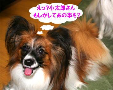 yuzu070123-2.jpg