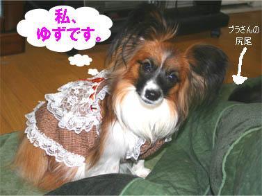 yuzu070124-1.jpg