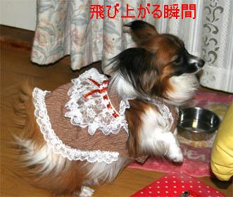 yuzu070124-3.jpg