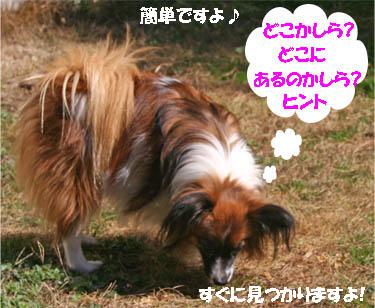 yuzu070125-1.jpg