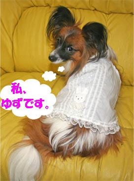 yuzu070126-1.jpg