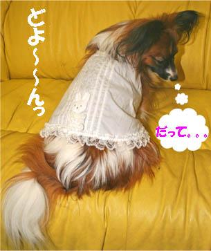 yuzu070126-2.jpg